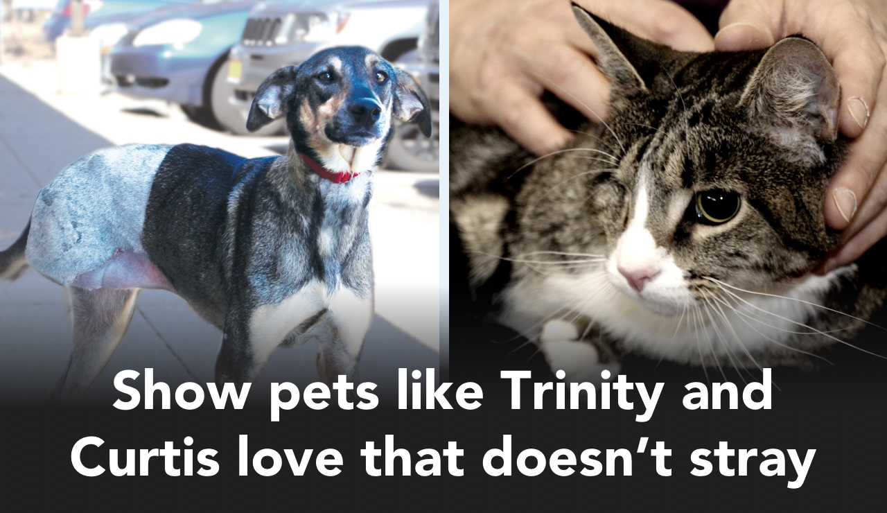 Show pets like Trinity and Curtis love that doesn't stray
