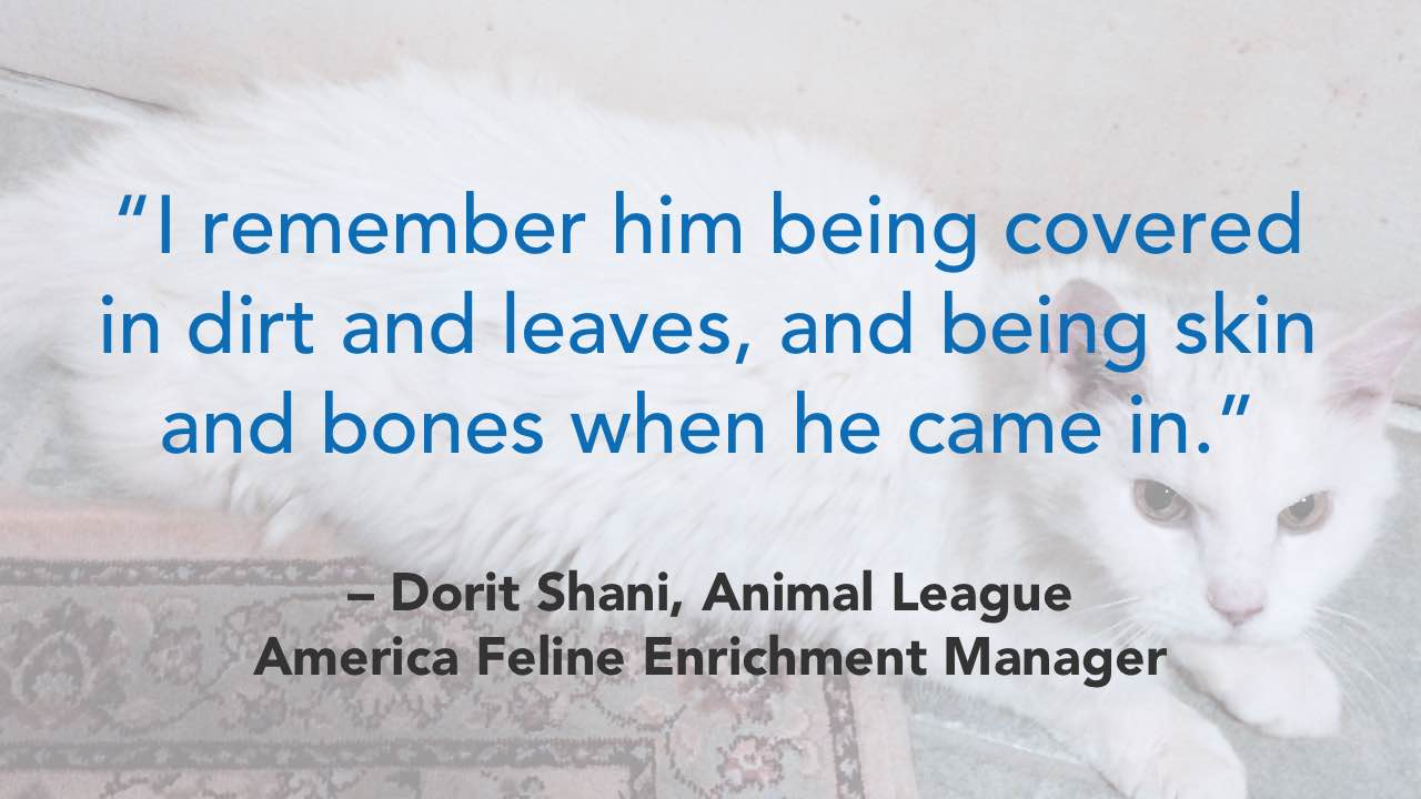 'I remember him being covered in dirt and leaves, and being skin and bones when he came in.' - Dorit Shani, Animal League America Feline Enrichment Manager