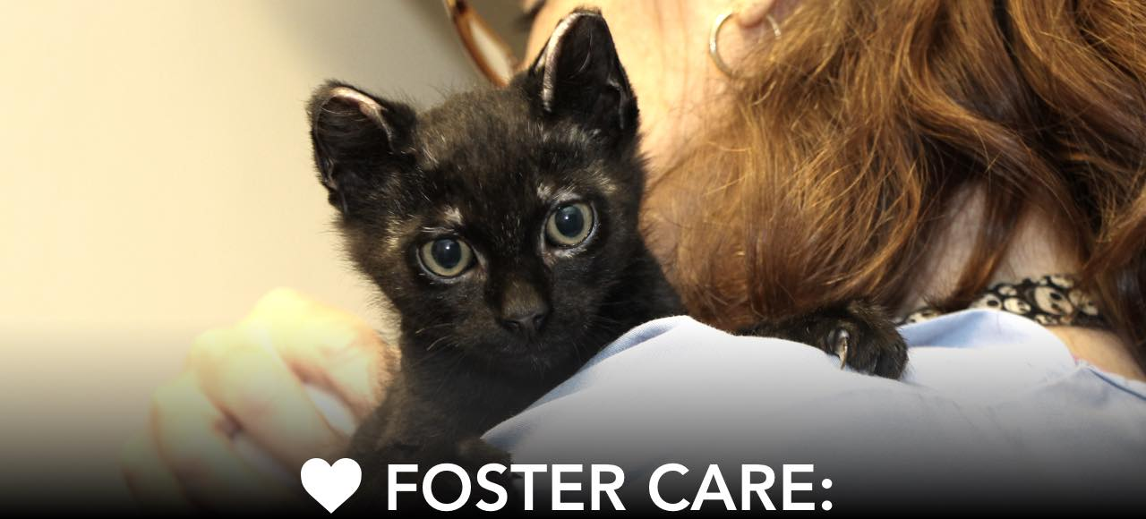FOSTER CARE: