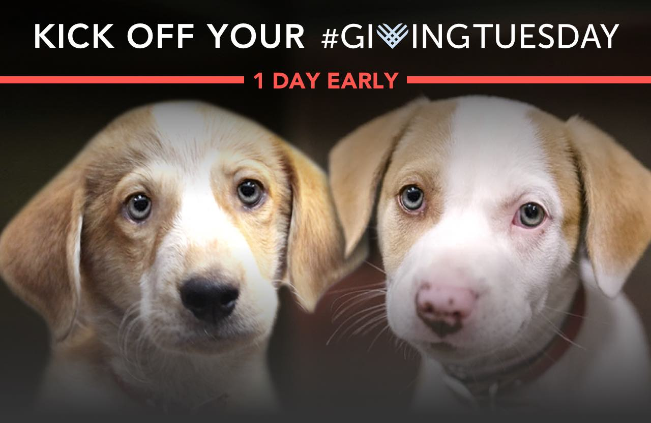 Kick off your #GivingTuesday 1 day early